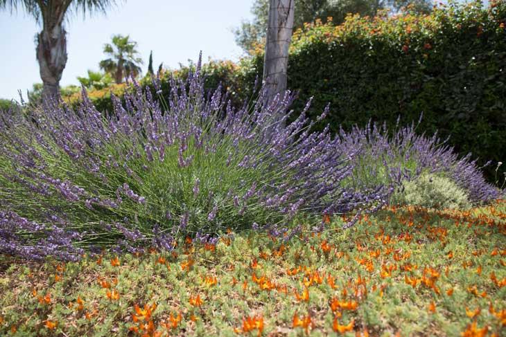 Renovação de Jardim no Carvoeiro